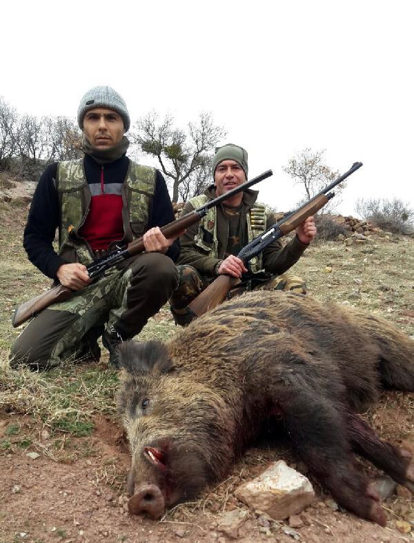 Sürek avında 30 yaban domuzu öldürüldü