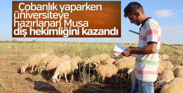 Çobanlıktan üniversiteye