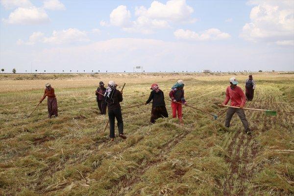 Tarım işçilerinin zorlu mesaisi