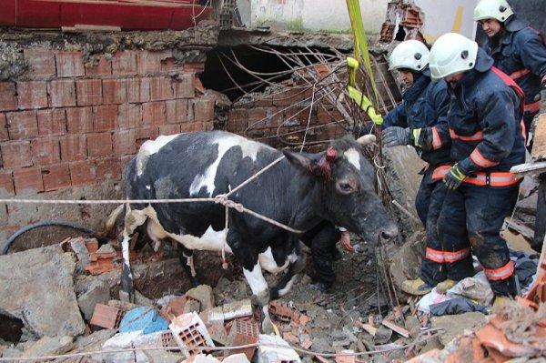 Göçük altında kalan ineği itfaiye kurtardı