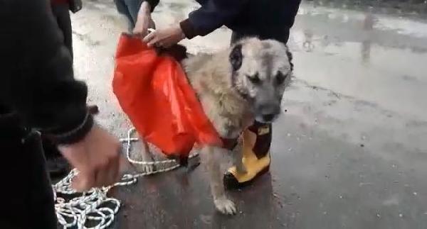 Taşkında mahsur kalan köpeğe halatlı kurtarma