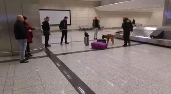 Hollanda'dan gelen yolcular havalimanında köpekle arandı