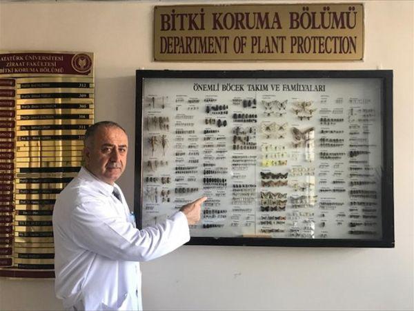 Keşfettiği böceğe babasının adını veren Türk profesör