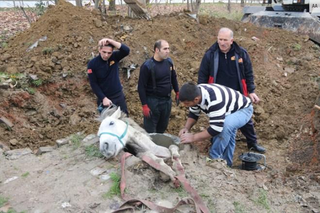 Rögar çukuruna düşen atın imdadına itfaiye yetişti