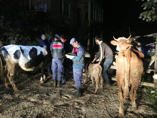 Bartın'da vatandaşların çalınan hayvanları bulundu