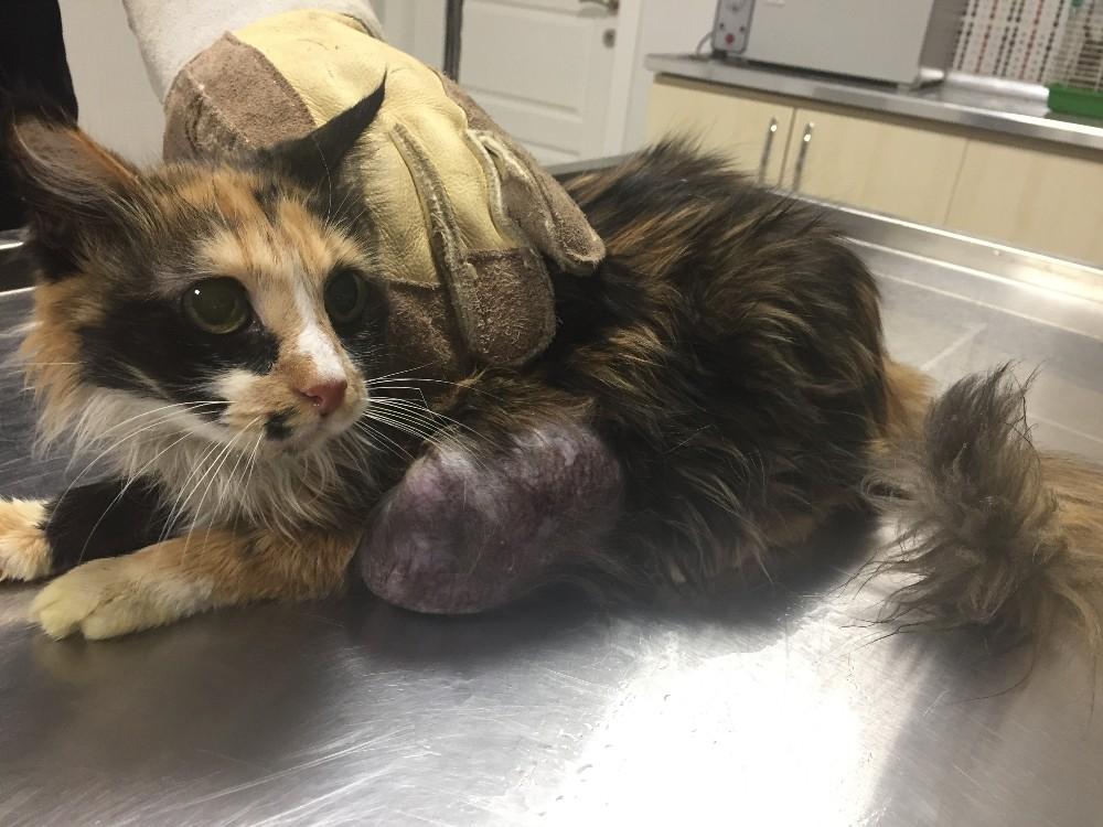 Hasta kediden 400 gramlık tümör alındı