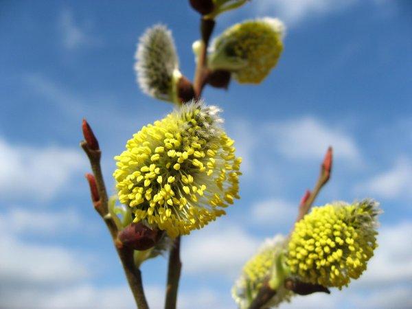 'Bahar alerjisi'ne dikkat