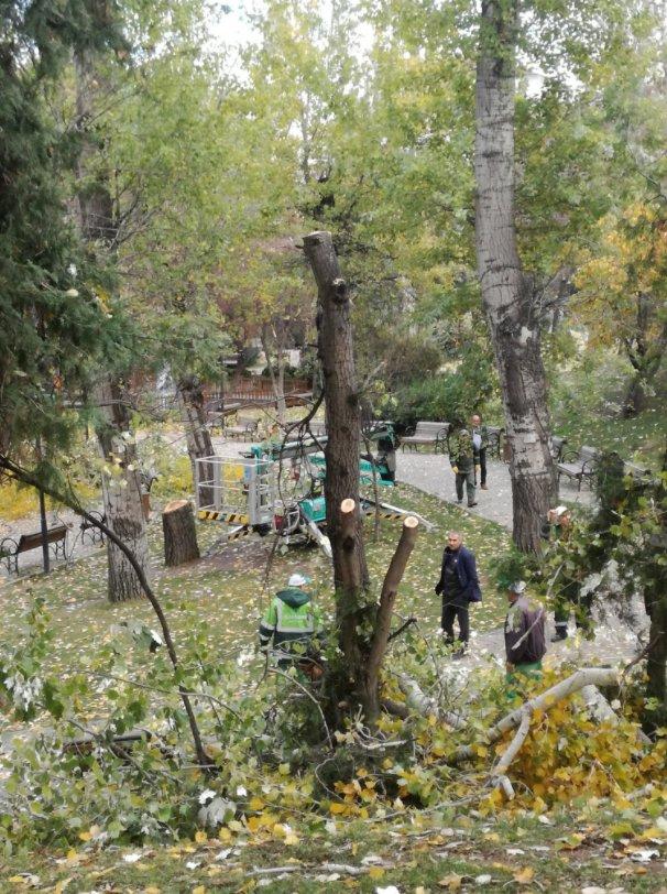 CHP'li Çankaya Belediyesi'nin ağaç katliamı