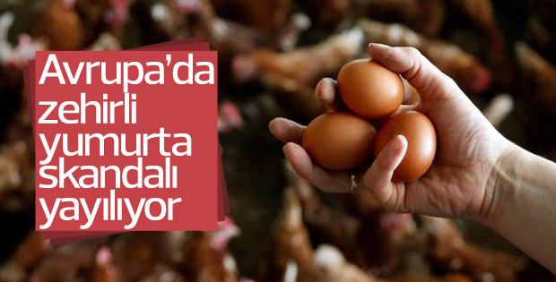Avrupa'da böcek ilaçlı yumurtalar yayılıyor