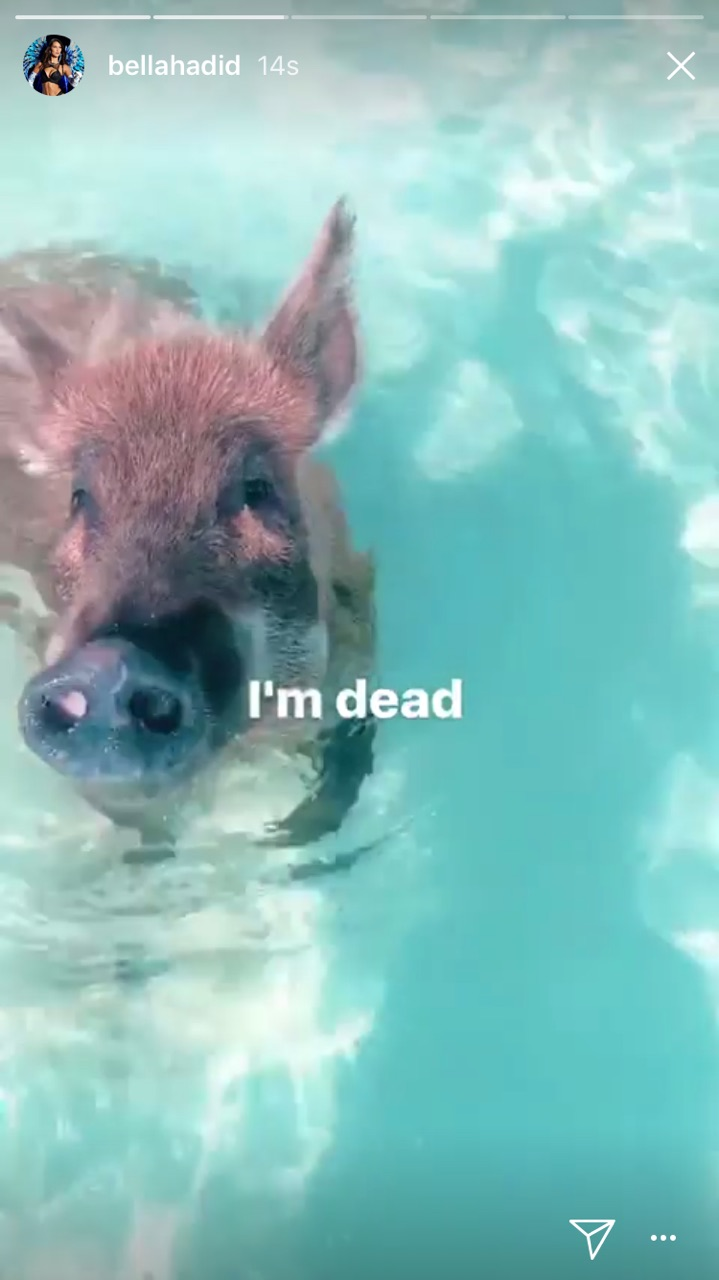 Bella Hadid domuzlarla serinledi