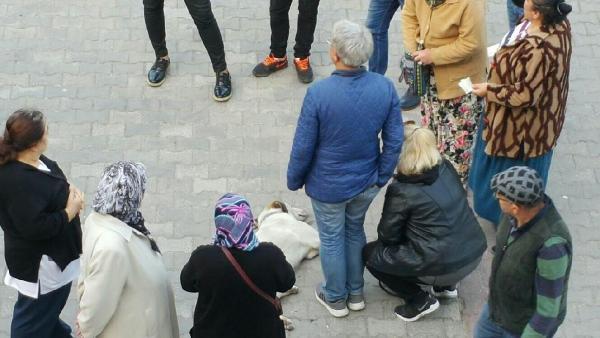Bayılan köpeğin yardımına vatandaşlar koştu