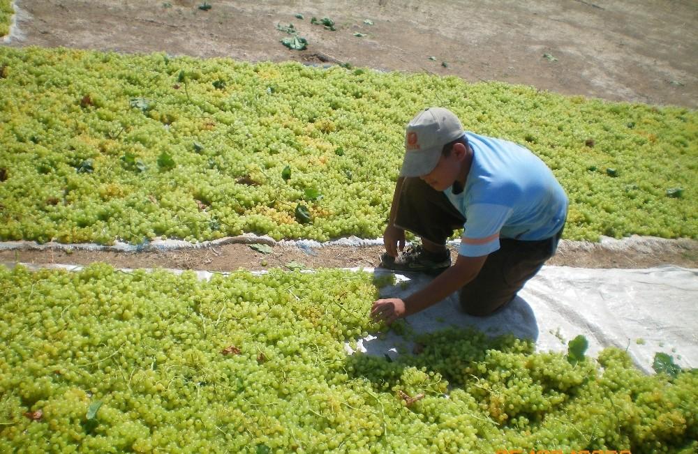 Kuru üzüm ihracatında son 9 yılın rekoru kırıldı