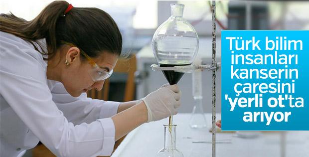 Türk bilim insanları kanserin çaresini pelemir bitkisinde arıyor