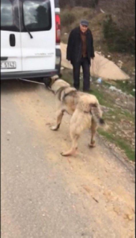 Köpeğini araca bağlayıp kilometrelerce sürükledi