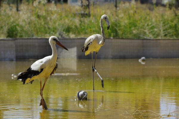 Van'da tedavi edilen 35 kuş doğaya bırakıldı