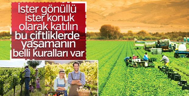 Türkiye'de ekolojik yaşam çiftlikleri