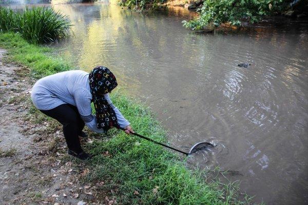kütahya domaniç balık ölümleri ile ilgili görsel sonucu