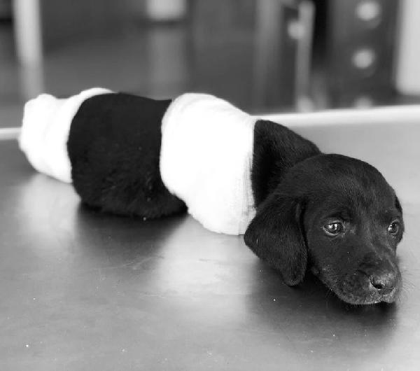 Yavru köpeğin ölümü olayında tutuklanan operatör tahliye edildi