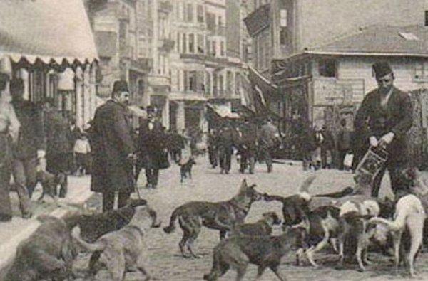 Osmanlı'da hayvan sevgisi: Mancacılık
