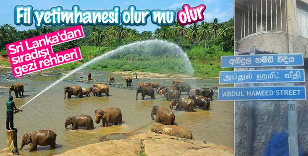 11 saat yol gittim, fil yetimhanesini görmek için