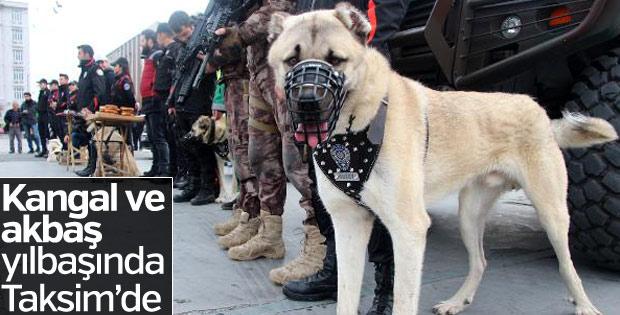 İstanbul'da yılbaşında kangal köpekleri görev yapacak