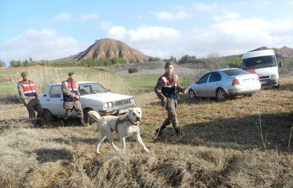 Denizli'de dövüştürülen kangallar kurtarıldı