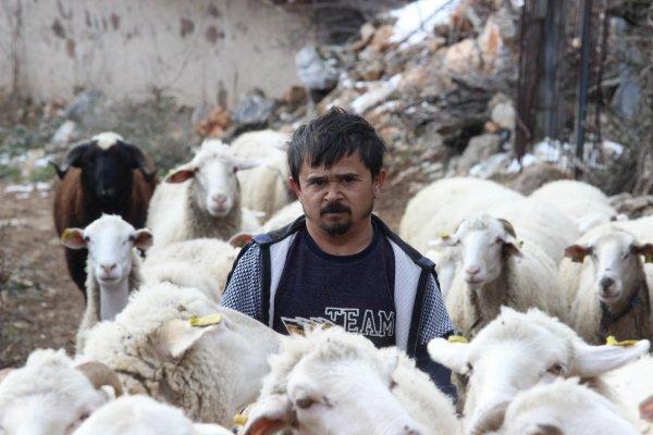 Bursa'da takdir toplayan çoban