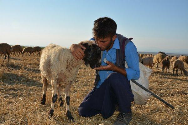 Çobanlık yaparken diş hekimliğini kazandı