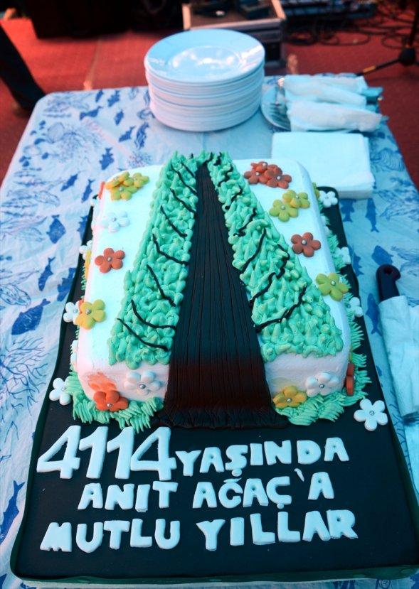 Dünyanın en yaşlı porsuk ağacına doğum günü pastası