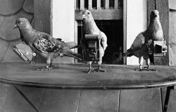 Tarihin ilk drone'u bir güvercindi