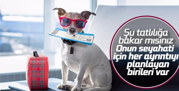 Evcil hayvanınız da Türk Hava Yolları'yla güvende
