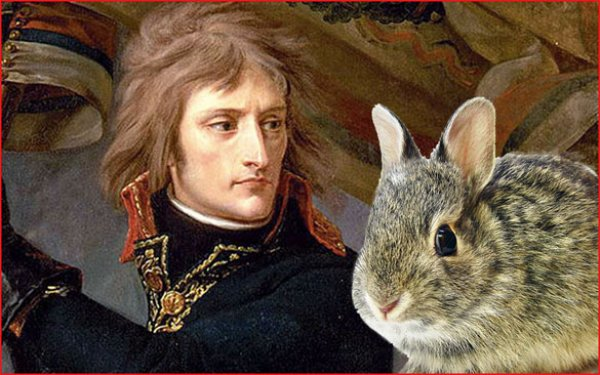 Napolyon?un tavşanlarla imtihanı