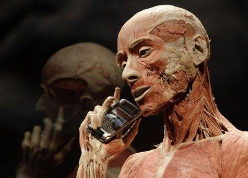 "body worlds exhibit essay ""skinless wonders"": body worlds and the victorian freak show nadja durbach department of history, university of utah, carolyn tanner irish humanities building."