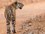 Hindistan'da vahşi hayvanlar 79 insanı öldürdü