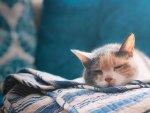 Kediniz uyku arkadaşınız olsun