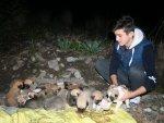 Hatay'da 22 yavru köpek, donmaktan kurtarıldı