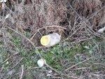 Denizli'de bidon içerisinde bebek cesedi bulundu