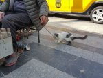 Boyacıyla sokak kedisinin dostluğu görülmeye değer
