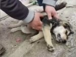 Turkey: Shopkeeper uses CPR to save choking puppy