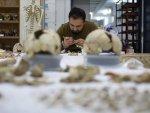 Anadolu'nun 15 bin yıllık 'DNA' hazinesi bulunacak