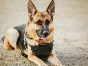 Germany to use military dogs to detect coronavirus