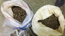 Aydın'da 30 kilogram kaçak orkide yumrusu ele geçirildi