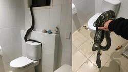 Avustralya'da banyoya giren dev piton korkuttu