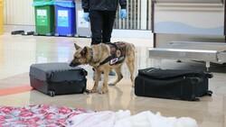 Denizli'de İranlı yolcunun valizinden uyuşturucu çıktı