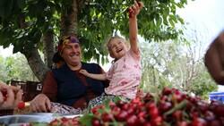 Gaziantep'te hasadına başlanan kiraz, 40 ülkeye gönderiliyor