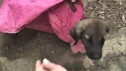 Denizli'de yavru köpeği çuvala koyup, ağzını sıkı sıkıya bağladılar