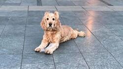 Antalya'daki köpek, artık yaşamadığı evden uzaklaştırıldı