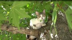 Isparta'da köpekten korkan Boncuk, ağaçta kaldı