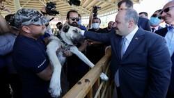 Sivas'ta kangal köpeği üretim ve eğitim merkezi açıldı