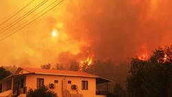 Muğla'da 40 bin hektarlık alan yangından zarar gördü
